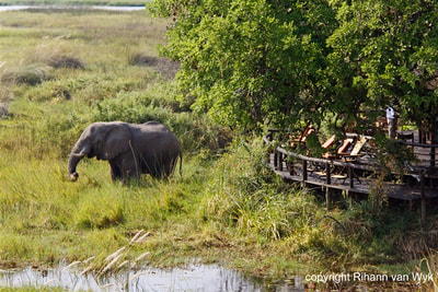Aerial view of deck and elephant visitor at Delta Camp, Okavango