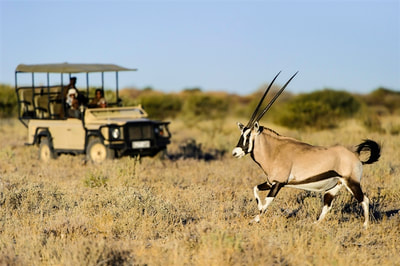 Game drive and oryx sighting, Central Kalahari Game Reserve, Botswana